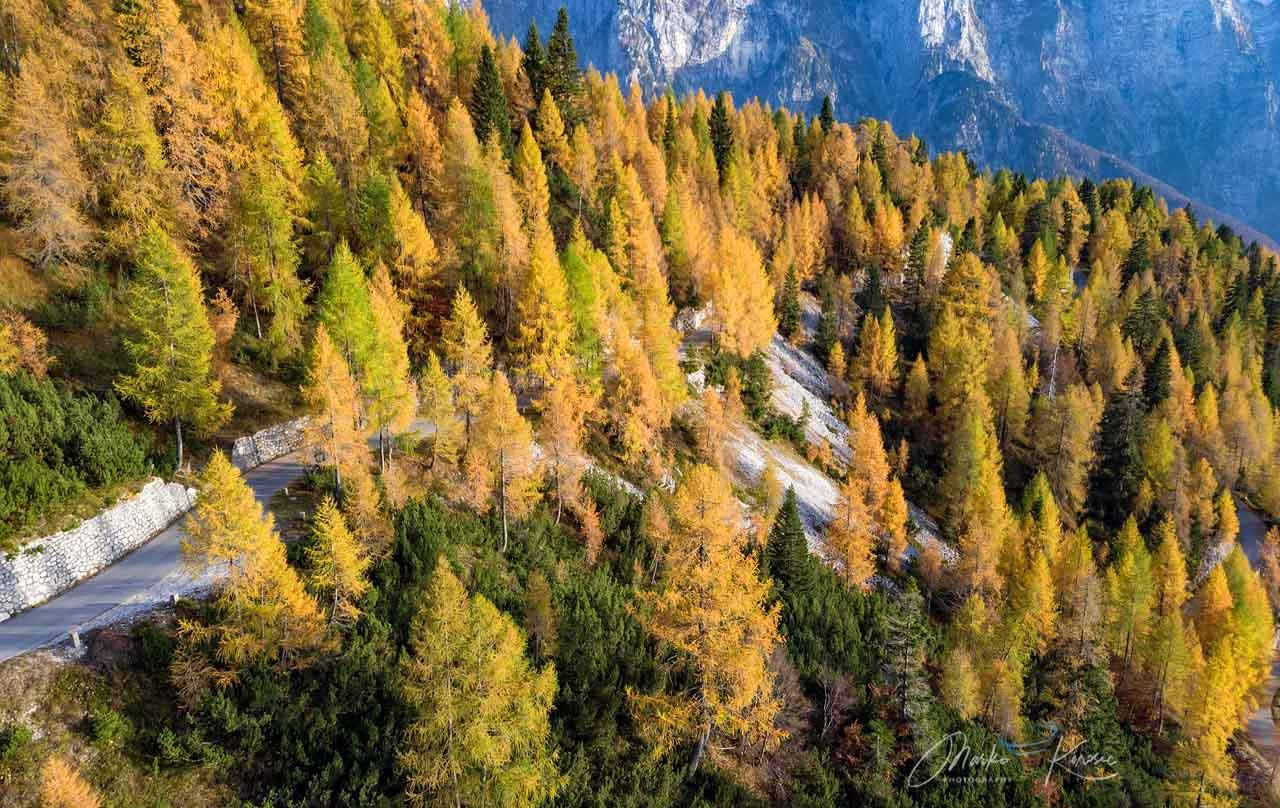 autumn-heatwave-france-england-indian-summer-trees