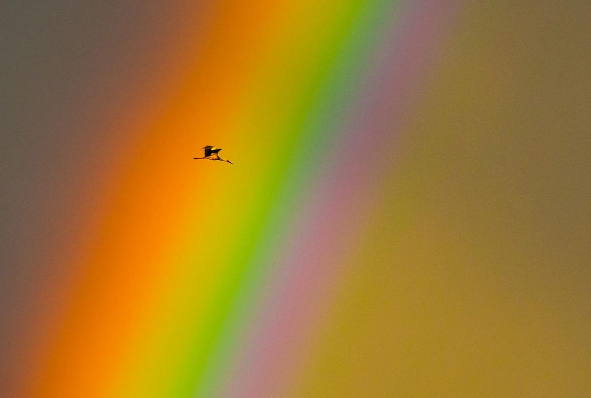 photo-contest-week-23-2021-mate-suto-rainbow