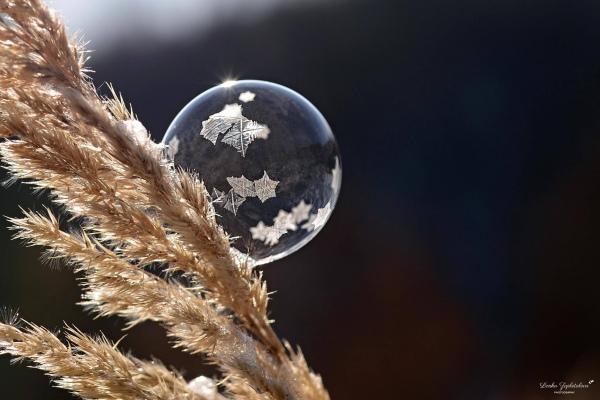 20170111_bubble_5