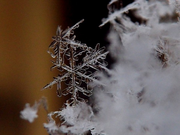 20170111_snowflakes_3